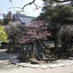 大方丈の前にある百観音霊場。多くの観音像が並び梅の名所でもあります。