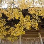 妙本寺祖師堂の左手にある池は紅葉や梅の名所です。