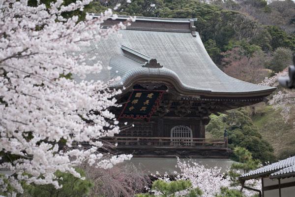 勇壮な建長寺の風情。