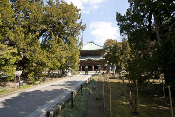 建長寺、仏殿前の柏槙(ビャクシン)の並木。