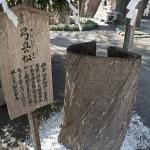 """鎌倉景正が弓を立てかけたと伝わる""""景正弓立の松""""。"""
