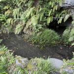 大倉弁財天境内にある弁天池。