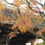 梵鐘付近の紅葉。