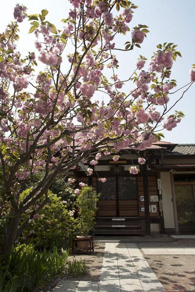 海に近い静かな一角、潮風香る場所にある向福寺。季節にはカイドウが迎えてくれます。桜が散って街が落ち着いた頃、訪れてみてください。