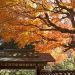 紅葉もまた東慶寺の旬です。