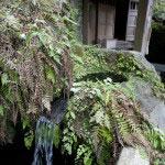 上之水神社の脇にはその名のとおり美しい水が湧き出ています。