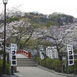 源平池にある旗上弁財天社。桜に囲まれます。