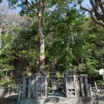 頼朝の墓の周囲は緑に囲まれています。
