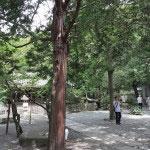 大仏左右後ろの三面は壁に囲まれています。そのさらに後ろは木立のある広いスペースです。