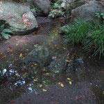 受付を過ぎてすぐの左手 には小川があり、夏などは涼しさを感じることができます。