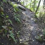 鳥居を抜けて登ります。なかなか細くて険しい道です。
