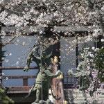 四天王像をバックにした贅沢な桜。
