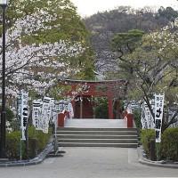 大島桜なども咲く白旗神社。源平池周囲の桜と相まって豪華な気分になります。