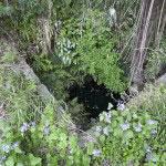 景時邸の井戸と伝わります。
