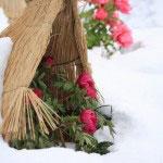 神苑牡丹園。鎌倉でもあまり記憶にないほどよく雪が降ったため生活は乱れましたが、牡丹はかつてない美しさでした。