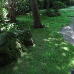 報国寺に入ると、まずは苔むした庭に感嘆します。
