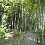 本堂に向かって登る4本の道のうち、一番右は車道を兼ねています。竹林があり人も少なく、竹林内に腰掛ける場所もあるので少し休むには最適。
