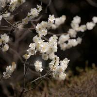報国寺の丸く剪定された梅を見ると、アップの写真も角をとりたくなります。