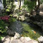 フロントロビーから見える池。井戸水を使った澄んだ水が清々しさを醸し出します。立派な鯉が泳ぎます。