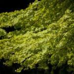光則寺の春の紅葉もなかなかです。
