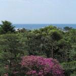 鎌倉文学館の躑躅(ツツジ)。5月初旬、由比ヶ浜、新緑、そして大紫躑躅の大木。