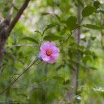 境内奥にある布袋様に向かう途中の椿。ひっそりと自然に咲く様はとても浄智寺らしい風情です。
