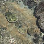 和賀江嶋の下は岩盤が露出しています。