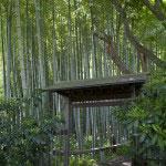 英勝寺境内の竹林。著莪(シャガ)も咲きます。