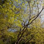 あるのは樹々のみ。余計な現代の人の手がない静かな鎌倉の谷戸は時空を超えた鎌倉散歩に最適です。