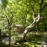 明月院。北条時頼の墓がある平場。紅葉の季節は特に見事な場所です。