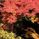 仏殿左側。この木はカメラに囲まれていました。写真下に手が入っています(笑)。人ごみを避けて遠目から撮影。