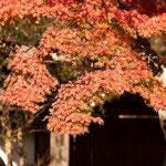 広い円覚寺は距離感が楽しめます。