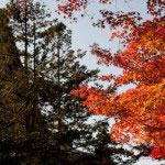 境内左側は仏殿の左から奥迄紅葉が続きます。