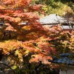 伽藍と紅葉が折り重なります。