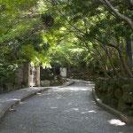 入口へと戻って、館までのスロープ。心落ち着く緑と静けさ。