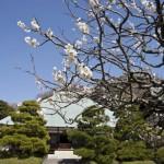 美しい一直線の境内参道と丸みを帯びた本堂の屋根、そして梅が独特の風情を醸し出します。