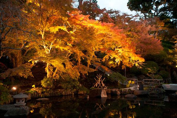 ライトアップされた長谷寺山門付近の紅葉。手前の池が紅葉を引き立てます。