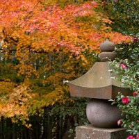 紅葉、竹林、五輪塔、山茶花と贅沢な組み合わせ。