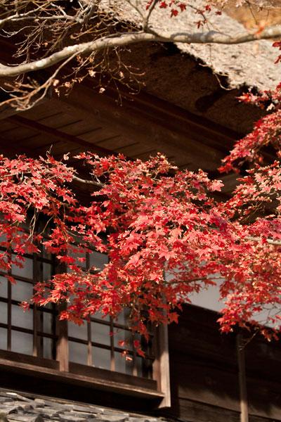 海蔵寺の紅葉。