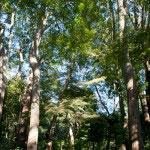 土牢を過ぎると広々とした杜に出ます。見事な楠や紫陽花などがあり、ゆっくり歴史の重みを感じられる空間です。