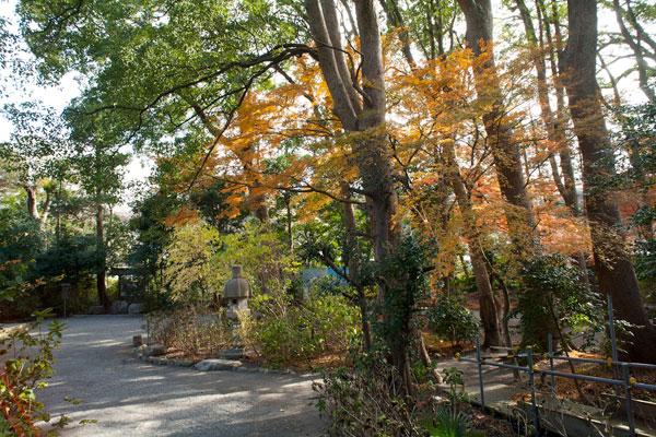 鎌倉宮の紅葉。空間がきれいな神苑の杜に紅葉がはえます。