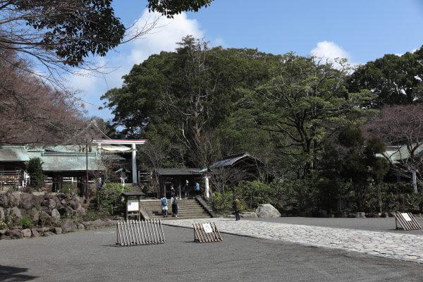 鎌倉宮の招霊木(オガタマノキ)
