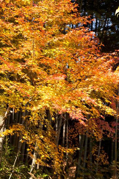 紅葉と竹林もよくあいます。