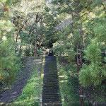 最初の階段を登りきると、同じボリュームの階段がもうひとつ。秋の光が綺麗に差し込んでいます。人の匂いが薄いのでとても清々しいです。