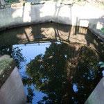 日親上人が氷が張る寒い時期、百日間に渡って修行を続けたという池。