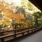 祖師堂の廊下から紅葉をのぞみます。
