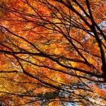 梵鐘の周囲には見事な紅葉があります。