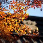 妙本寺二天門にかかる紅葉。