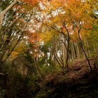 山中ちらほらと紅葉はありますが、この谷だけは多くの木が集中的に紅葉します。