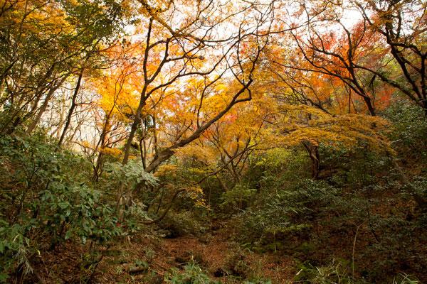 獅子舞の紅葉。紅葉を見るため? 側面に登る道がつくられています。中腹くらいまで登った景色。